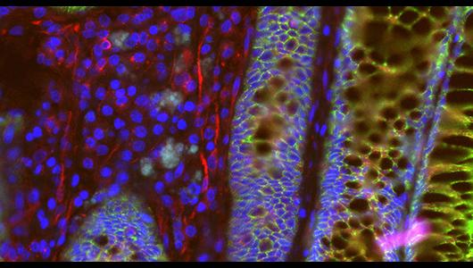Studentische Hilfskraft (f/m/d) Bildbearbeitung - Data Science of Bioimages Lab, Center for Molecular Medicine Cologne - Logo